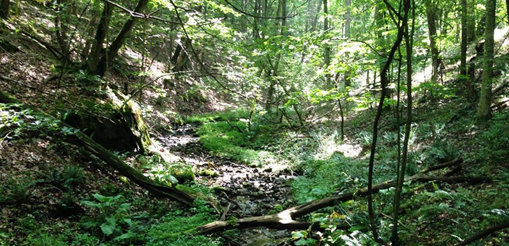 mit-bank-forest-conserv