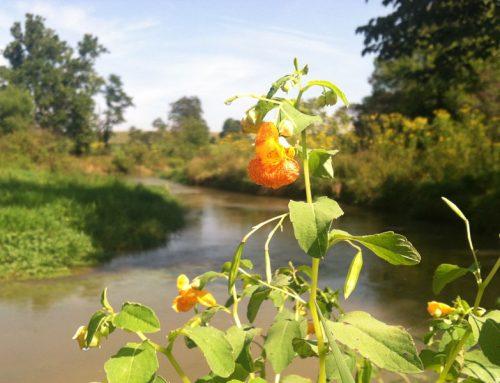 Mossy Creek-North River Environmental Bank