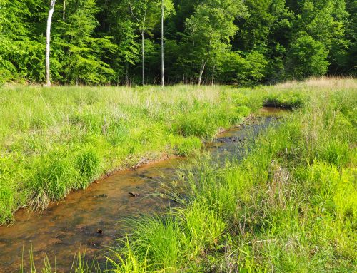 Ivy Creek Stream Restoration Nutrient Bank