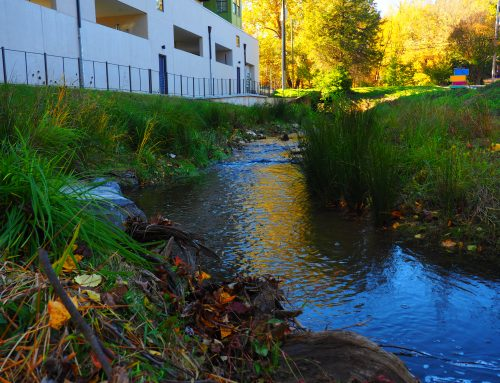 Meadow Creek – Cedar Court Stream Restoration